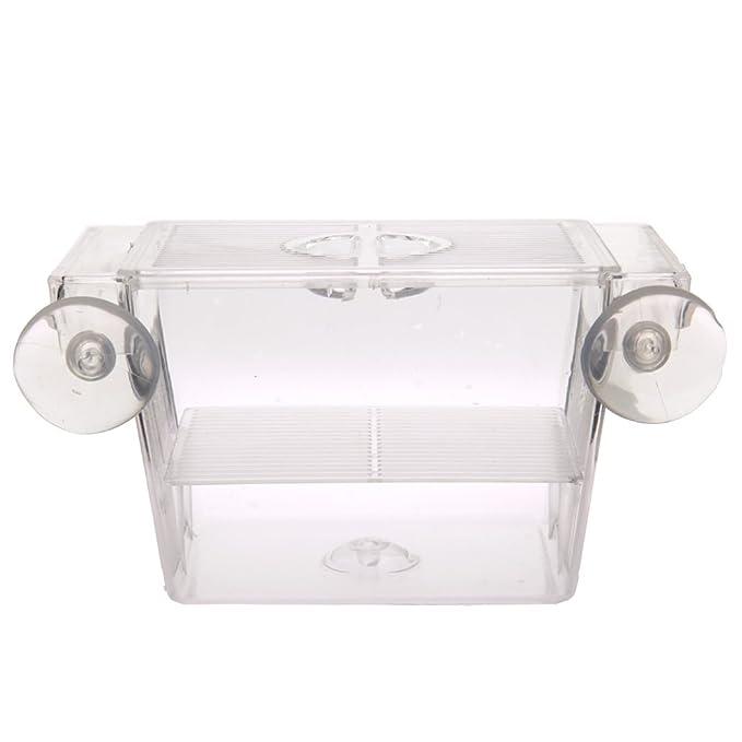 Pecera flotante Domybest; criadero de peces, de plástico y con ventosas: Amazon.es: Productos para mascotas