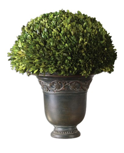 Boxwood Globe Uttermost Preserved (Uttermost Globe Preserved Boxwood with Preserved While Freshly Picked, Natural Evergreen Foliage)