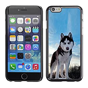 Impact Case Cover with Art Pattern Designs FOR Apple Iphone 6 Plus 5.5 Happy Husky Dog Betty shop