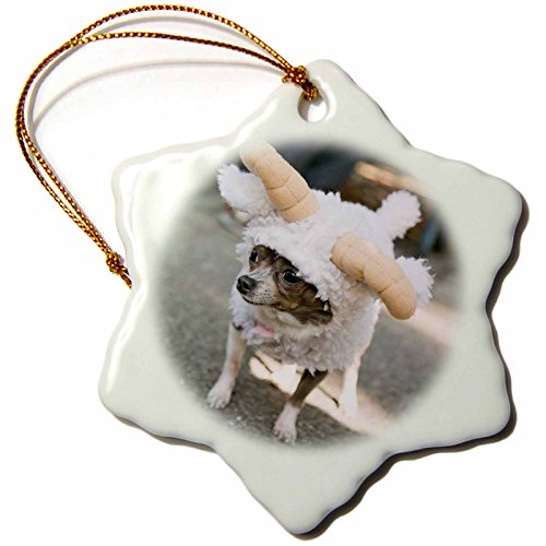 3dRose Danita Delimont - Halloween - New York City. Pet Halloween contest, Thompkins Square Park. - 3 inch Snowflake Porcelain Ornament (orn_231347_1) -