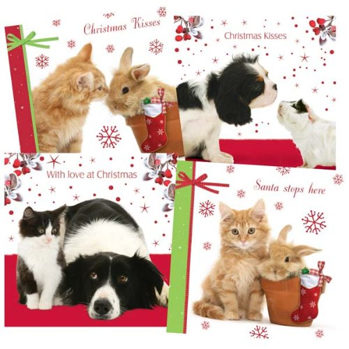 Boxed Cat Christmas Cards.Animal Christmas Cards Dog Cat Rabbit Guinea Pig Selection Box Pack Of 40