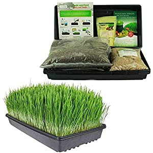 Living Whole Foods Certified Organic Wheatgrass Growing Kit – Grow & Juice Wheat Grass: Trays, Seed, Coco Coir Soil…