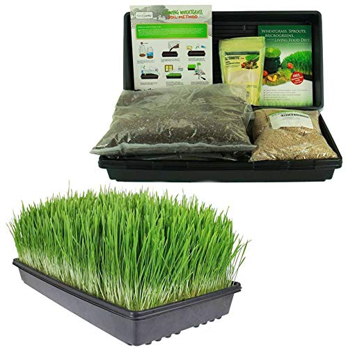 Certified Organic Wheatgrass Growing Kit | Grow & Juice Wheat Grass: Trays, Seed, Soil, Instructions, Wheatgrass Book, Trace Mineral Fertilizer & More (Best Starter Fertilizer For Grass Seed)