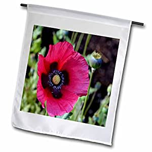 WhiteOak Photography Floral Prints - A light Pink Poppy Flower - 12 x 18 inch Garden Flag (fl_49920_1)