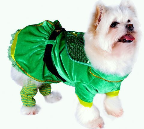 Leprechaun Girl Costume for Dogs (Size 5 (14