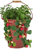 HIT 8494E XR Enameled Floor or Hanging Strawberry/Herb Planter, 12 by 12-Inch, Red
