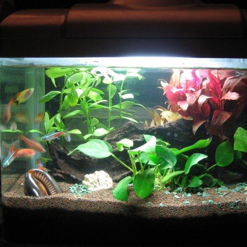 Amazon Com Tingkam Aquarium Light With 42 Led White Color Fish