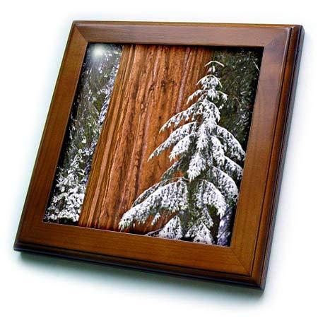 3dRose Danita Delimont - Trees - Giant Sequoia in Winter, Sequoia National Park, California, USA - 8x8 Framed Tile (ft_314710_1) ()