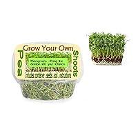 Pea Shoot Skit | Sunflower Shoot Kits | Radish Shoot Kit | Organically Grow | Set of 3!