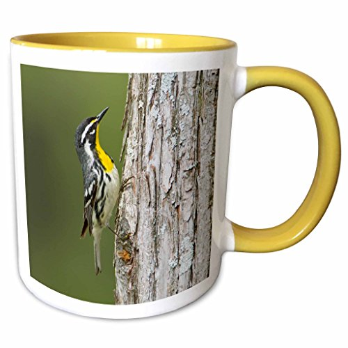 3dRose Danita Delimont - Larry Ditto - Birds - Yellow-throated Warbler hunting insects on cypress tree, Texas, USA - 11oz Two-Tone Yellow Mug - Cypress Texas Outlet