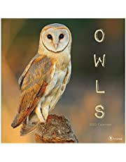 """TF PUBLISHING - 2022 Owls Wall Calendar - Home and Office Organizer - Large Monthly Grid for Planning and Schedules - 4 Bonus Months - 12""""x12"""""""