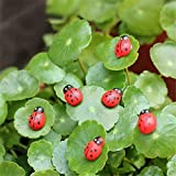 Danmu Self-Adhesive Ladybugs Miniature Plant Pots Bonsai Craft Micro Landscape DIY Decor 20pcs Review