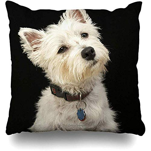 - Throw Pillow Covers Westie West Highland Terrier with Collar Outdoor Square Size 18 x 18 Inches Cushion Cases Home Pillowcases