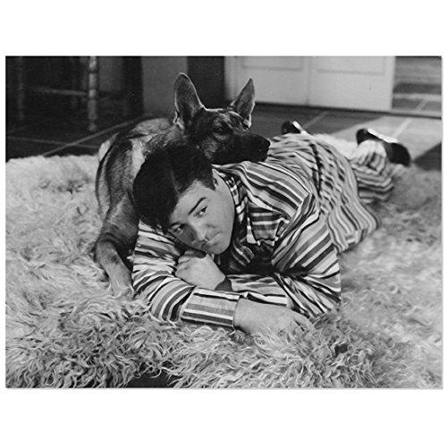 Lou Costello with German Shepherd on Floor 8 X 10 Inch ()