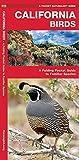 California Birds: A Folding Pocket Guide to Familiar Species (A Pocket Naturalist Guide)
