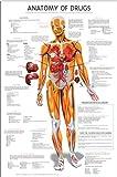 org chart - Anatomy of Drugs