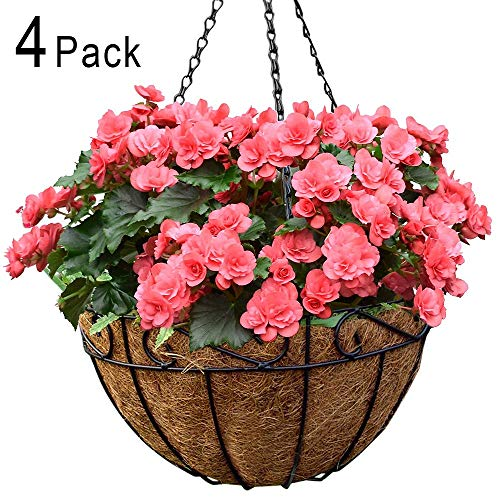 Amagabeli 4 Pack Metal Hanging Planter Basket with Coco Coir Liner 14 Inch Round Wire Plant Holder with Chain Porch Decor Flower Pots Hanger Garden Decoration Indoor Outdoor Watering Hanging Baskets (Best Way To Grow Strawberries In A Hanging Basket)