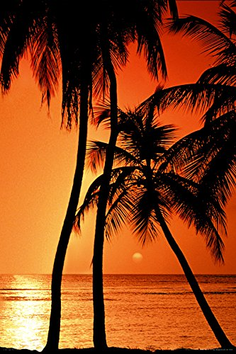 amazon com sunset palm trees decorative tropical scenic travel