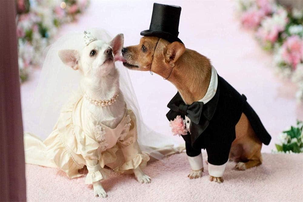 tuoweilai Kits para Adultos Perro Casado Navidad, Año Nuevo, Día de San Valentín, Regalos Decorativos o marcosnúmeros en Lienzo-No Frame-40x50cm