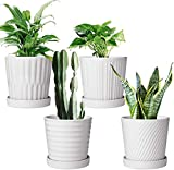 Flower Pots,6 Inch Succulent Pots with
