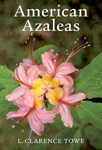 american-azaleas