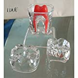 75mm Dental Transparent Teeth Model Detachable Pathology Demonstration Tooth Molar Model Crystal Base Dentistry Removable Tooth Teaching Tools 4 Parts