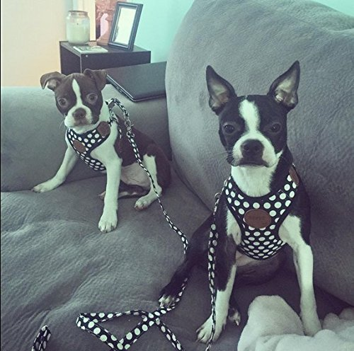Puppy Harness and Leash for Small Dog Soft Mesh Pet Vest Black XS by KOOLTAIL (Image #7)