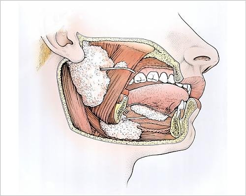 Photographic Print of Diagram showing inside of mouth and salivary - Diagram The Inside Nose