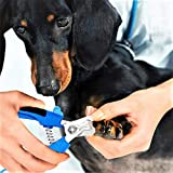 BOBOCAWA Dog Nail Clippers Trimmer Set - Safety