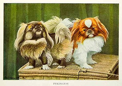 1919 Color Print Pekingese Dog Breed Louis Agassiz Fuertes Art Pets Animals NGM5 - Original Color Print (Fuertes Color)
