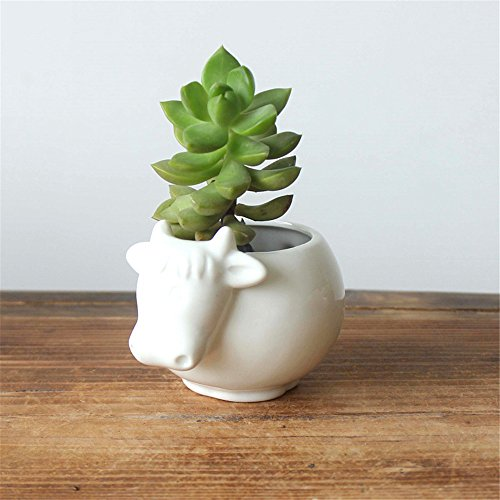 - Cow Pots White Ceramic Succulent Planter Pots/Mini Flower Plant Containers Cute Animal Shaped Cartoon Planter Pots Plant Window Boxes Vase