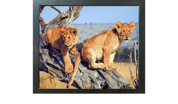 Lion Cubs Wildlife Animal Nature Wall Decor Mahogany Framed Art Print Picture