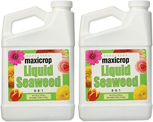 Maxicrop Liquid Seaweed (Kelp Extract, 32 Oz) (Pack of 2)