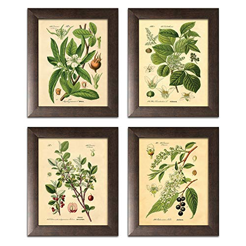 botanical prints framed - 2