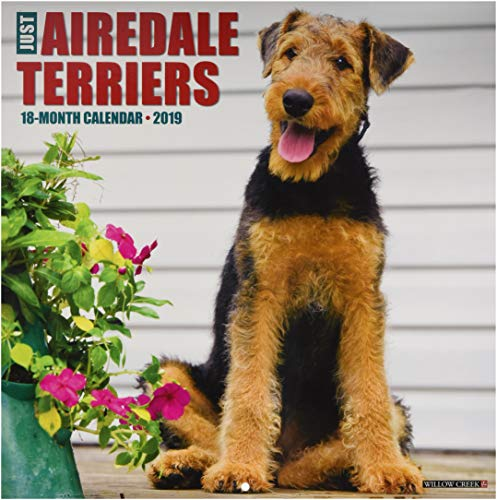 Just Airedale Terriers 2019 Wall Calendar (Dog Breed Calendar)
