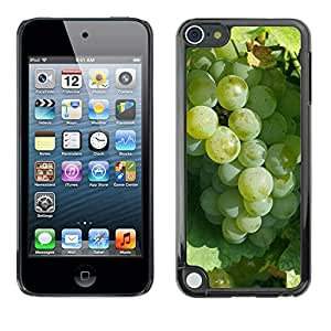Print Motif Coque de protection Case Cover // M00237193 Uva vinícola verde alimento de la fruta // Apple ipod Touch 5 5G 5th 6 6G 6th