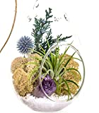 Bliss Gardens Air Plant Terrarium with Purple Amethyst Crystal/7'' Teardrop Glass/Shabby Chic
