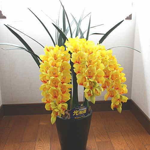 シンピジューム 黄色3本立ち 花の大きなMサイズ 本物そっくりな造花 空気を浄化してくれる光触媒加工 B01FCX58II