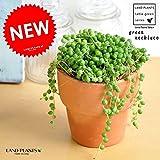 LAND PLANTS グリーンネックレス 皿付きテラコッタ鉢