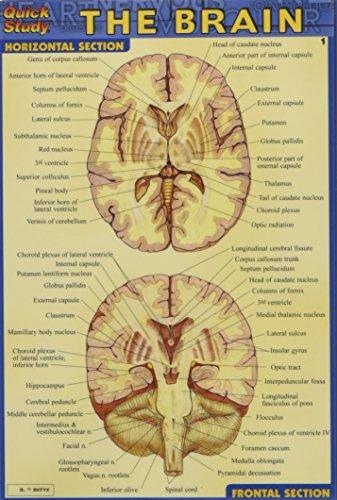 Brain (Quick Study)