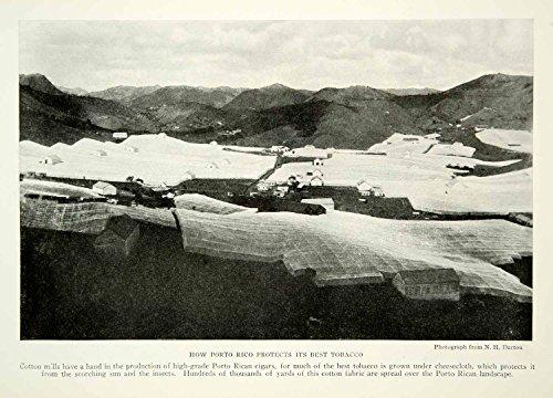 1924-print-puerto-rico-cigar-tobacco-cotton-cloth-protectant-historical-ngm9-original-halftone-print