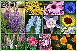 David's Garden Seeds Wildflower Deer Resistant Mix DGS112BVC (Multi) 500 Open Pollinated Seeds