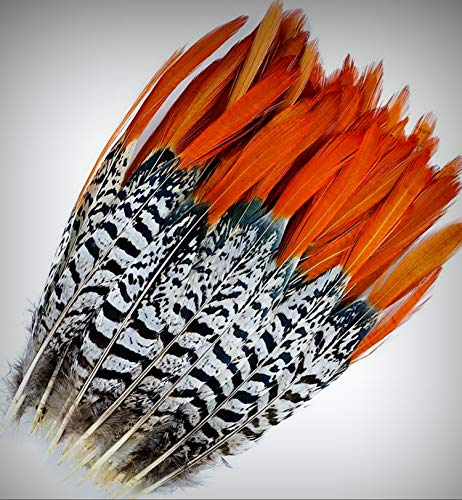 1 Packet of 3 Pcs Lady Amherst Pheasant Crafting Feathers 4-12
