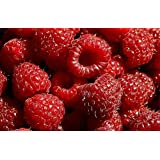 Exotic Plants Raspberry Red - - 10 semi