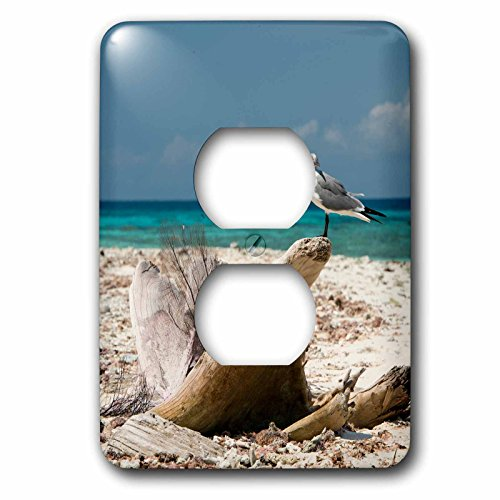3d Rose 3dRose lsp_207347_6 Belize, Laughing Bird Caye Np...