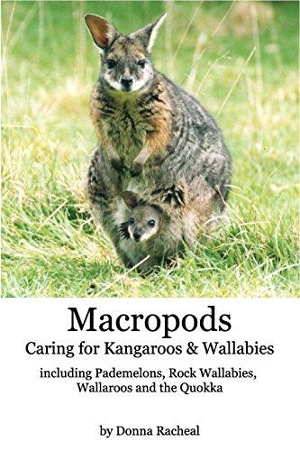 Macropods - Caring for Kangaroos and Wal - Macropod Animals Shopping Results