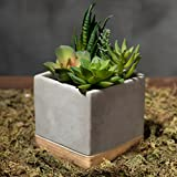 MyGift Assorted Faux Succulent Plant Arrangement in Square Cement-Tone Planter
