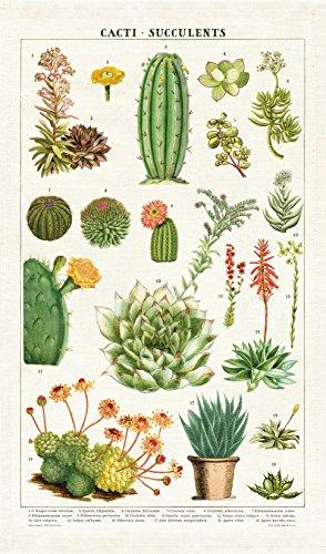 Cavallini Papers & Co. Cavallini Vintage Succulents Cotton Tea Towel