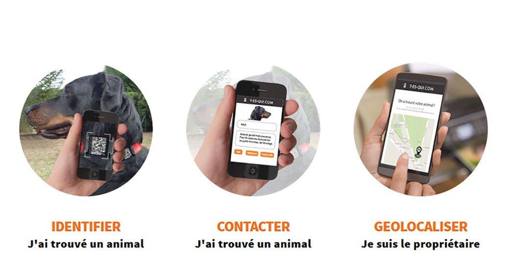 Medalla conectada QR Code/NFC: Amazon.es: Productos para mascotas