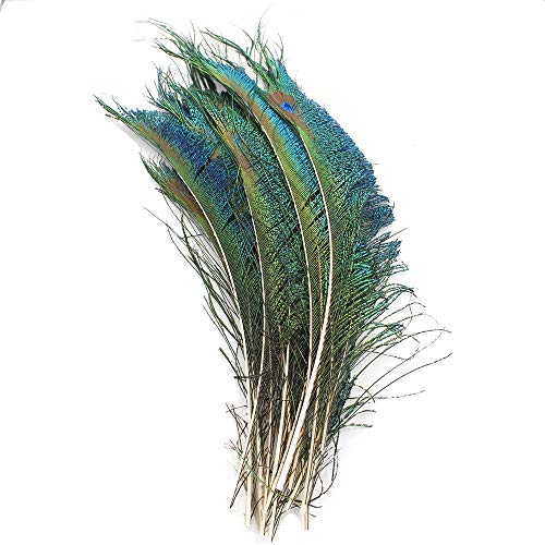 Real Natural Peacock Sword Feathers 12-15 inchs for DIY Craft,Wedding Decoratio (20 - Centerpieces Feather Peacock